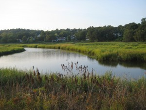 A view of the Saugus River Marsh.