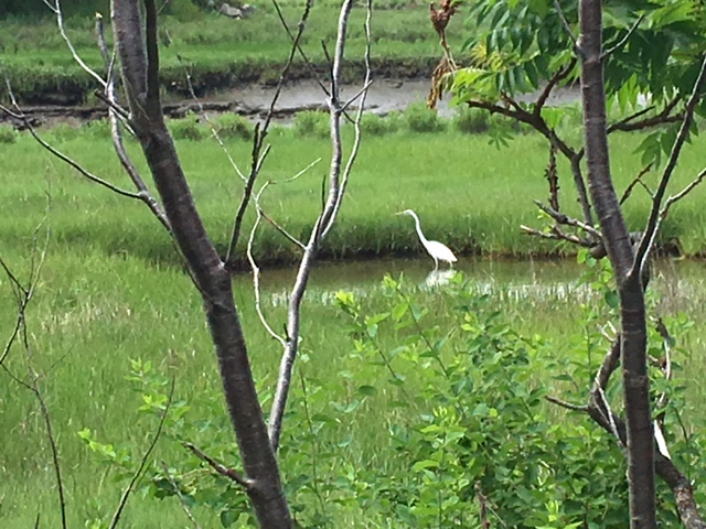 A bird in the river in Saugus, Mass.